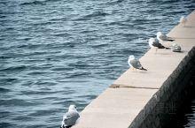 #逸香兔在異鄉# 門司港 无意之間到了這裡,美好舒適的不想離開 有海有古跡,懷舊的好地方。 如果時間