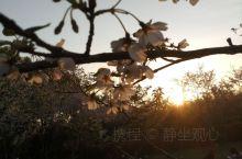 终于看到无锡的樱花了,虽然不是在鼋头渚,不过依然很美,手机随便拍的就很美