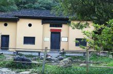 红色政权的发源地         茨坪景区是井冈山革命根据地的核心区域,周边群山环绕,小镇山青水秀。
