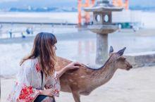 广岛2日行程感受战争的残酷,享受人与自然的融合 广岛作为日本的中国地区最大的城市,在国际上的知名程度