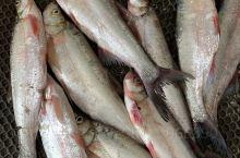 兴凯湖泄洪一闸,飞鱼餐厅今天新上的大白鱼,有要吃的赶紧预定,刚上船的,新鲜程度堪比活的白鱼。