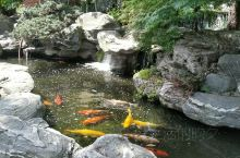 俯水枕石游鱼出听;临流枕石化蝶忘机。 一个不起眼的园子,深入其中,才发现内有乾坤,每一石,每一木,美