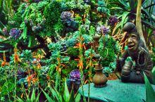"""花穹占地约1.2公顷,曾被吉尼斯世界纪录列为""""世界上最大的玻璃冷室""""。室内常年维持在20多度,完美复"""