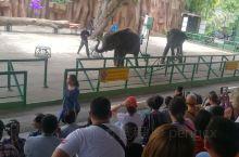 泰国动物园表演