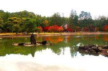 潇潇洒洒,古色传香——毛越寺  毛越寺,是日本规模较大的一座寺庙。里面有假山,有湖泊,有枫树林,有很