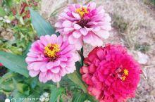 盘龙村,不知名的小花。