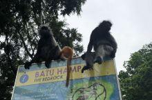 当天到了吉隆坡,飞机晚点了好久好久,错过了天空之境的出现时间,不过来喂猴子的行程还是实现了,主要是带