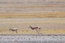 20天,行走在着蓝天白云和一措再措的路上,今天来到西藏最大的湖.色林措,审美已经疲劳到,看山还是山,