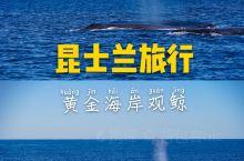黄金海岸观鲸之旅 每年5月-11月,是澳洲观鲸的最佳季节。成千上万的鲸鱼沿着海岸线迁徒,从南极洲一直
