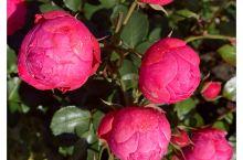 美丽的花园 太多的鲜花种类~让人流连忘返