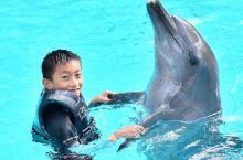 海豚伴游,水上探险乐园浓墨重彩的一笔。  第一次来新加坡时,女儿尚小,当时选择了海豚探索,适合不会