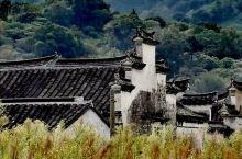 苏州西山东村古村,不是网红打卡地,小村安静,古朴。村里的徐氏宗祠和敬修堂保存完好,很有特色。尤其是敬