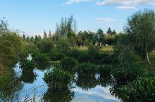 今年十一在海东湿地,夕阳西下之时,满目美景!可惜维护不充,见有人随手摘下很多薰衣草花用塑料袋带走……
