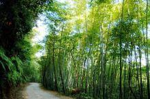 """重庆楠竹山森林公园融""""幽、秀、静""""一体,被重庆人喻为硕大的天然空调。楠竹山拥有得天独厚的旅游资源"""