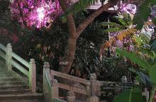 海南分界洲岛海钓会所,是岛上的唯一一座酒店,分别有临海房,观海房间,独栋房间,分布在岛上各个位置,价