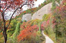 山中旧路枫林远