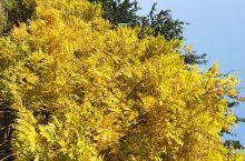 秋风萧瑟,霜打树叶变了样。