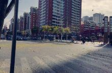 立冬的第二天,西宁的大街上,冬日依旧,清风徐来,枫叶满地