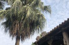 这棵高大的葵树应该相当有历史了……