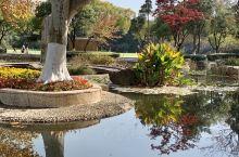 【游龙城层林尽染处——红梅公园有感】  晴空万里碧如洗,红叶黄叶形影依。 誰道江南秋偏晚,层林尽染阳