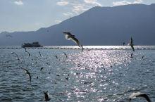 昆明滇池这个季节去比较好,红嘴海鸥非常多,景色也很美,交通非常方便,旁边就是民族村,不过滇池太大了,