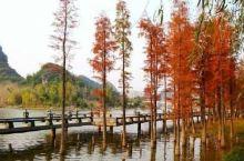 """在桂林,有一个赏枫圣地,被誉为""""南方小香山"""",这就是古东红枫!   如果你没有赶上前一段时间的"""""""