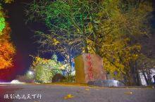 又是一年冬来到, 三明市大田县广平镇万宅村 银杏公园也迎来了一年里最美的时光, 杏果熟落,满树金黄,