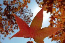 深秋周末好去处——北京延庆 百里山水画廊  自驾游! 在红叶渲染的深秋,延庆百里山水画廊是欣赏秋色的