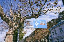 庐山赏秋: 【景点攻略】两天自驾游:第一天:庐山植物园观枫叶 到庐山观枫叶最有名的还是庐山植物园。第