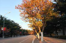 旅顺最美的风景,太阳沟的步行街!