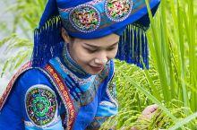 旧州已有2300余年的历史,位于广西靖西县城南8公里处。独特的地形地貌赋予了旧州如诗如画的田园风光,