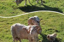 来到新西兰一定不能错过来场生动有趣的农场游,在这里完全可以体现了 和动物的亲密接触 以及人与大自然的