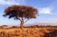 坦桑尼亚 乞力马扎罗山上是雪,山下是土 这边是肯尼亚,那边是坦桑尼亚 夜宿山脚下的茅草帐篷 听着动物
