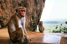 斯里兰卡之旅| 狮子岩    在爬狮子岩的时候可以看见很多猴子坐在路边。非常慵懒,这里的猴子尾巴比较