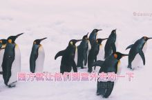 日本旅行北海道旭山动物园看企鹅散步 冬季大概是旭山动物园人气最高的时候,因为有萌萌的企鹅散步!每年1