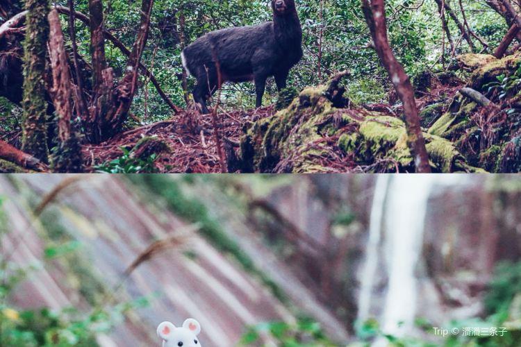屋久杉自然館4