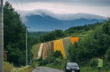 北海道美瑛,一个四季都浪漫的地方。  今年的夏,我又一次来到了这里,和麦先生一起。拼布之路依然美丽,