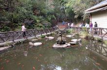 千年放生池