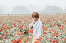 昆明周边的千亩玫瑰庄园,给你一个夏天的浪漫  夏天去云南普者黑时候看到的玫瑰庄园,种植着一大片的玫瑰