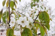 游椿树沟,天公不作美,阴雨连绵。 后四月飞雪,纷纷扬扬,湿了头发鞋子,冷的清爽,却也是意外的惊喜,得