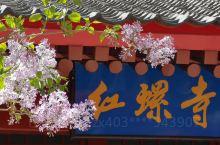 红螺寺赏春花