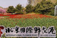 畅游花的海洋_北京国际鲜花港