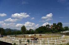 【平利马盘山AAA级景区】马盘山生态农业观光园是一家集生态休闲农业观光、富硒农产品开发、特色美食开发