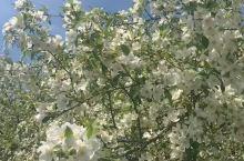 鲜花盛开的乌兰布统