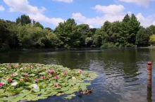 喜欢和爱好养花的人,一定别错过去汉米尔顿花园看一看,这里有日本花园,中国花园,意大利花园,玫瑰花园等