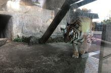 [熊本市動植物園] 熊本市內的動物園,經過了熊本大地震之後, 2018/12/22全園正常營業!