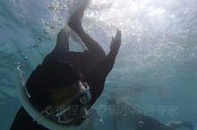 心钻岛— 千万不要去,不然去了就不想走了; 浮潜玩到够,要不是体力不支,真心不想上来; 水质也是不错