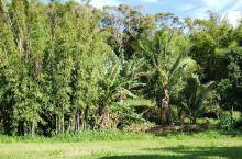 毛宜岛的HANA hwy,过了hana机场继续往下开,后面的风景比前面一段更加美,只不过路就更加险峻