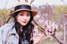 【李中偶遇桃花林】 原本是以为是扎入了水森林的童话世界,未曾想到快出园的时候竟又扎入桃花的世界,好似