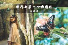 世界上第一座蝴蝶园竟然在这里! 槟城的蝴蝶园(Penang Butterfly Farm)建于198